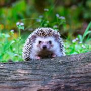 a hedgehog sat on a fallen tree