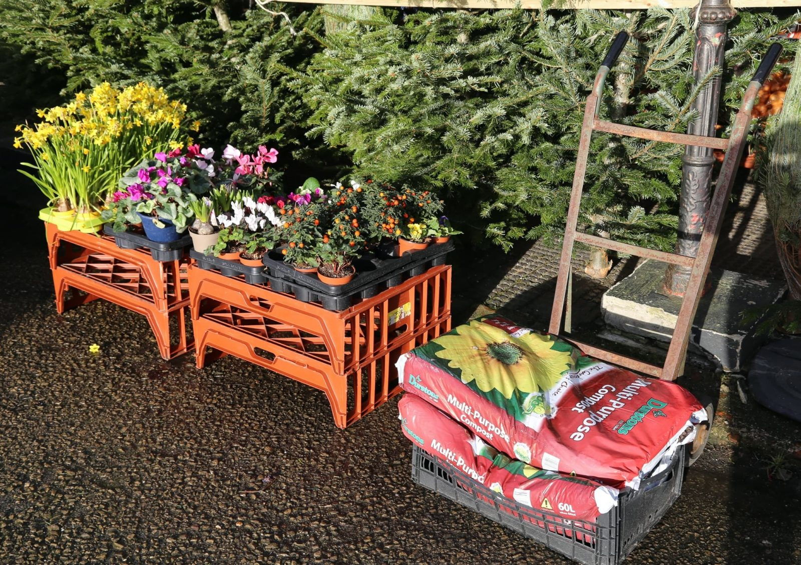 compost and plants in a garden centre