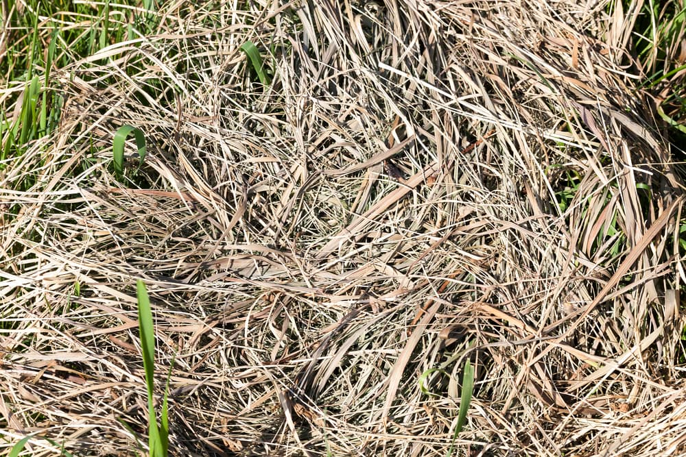 dried out grass