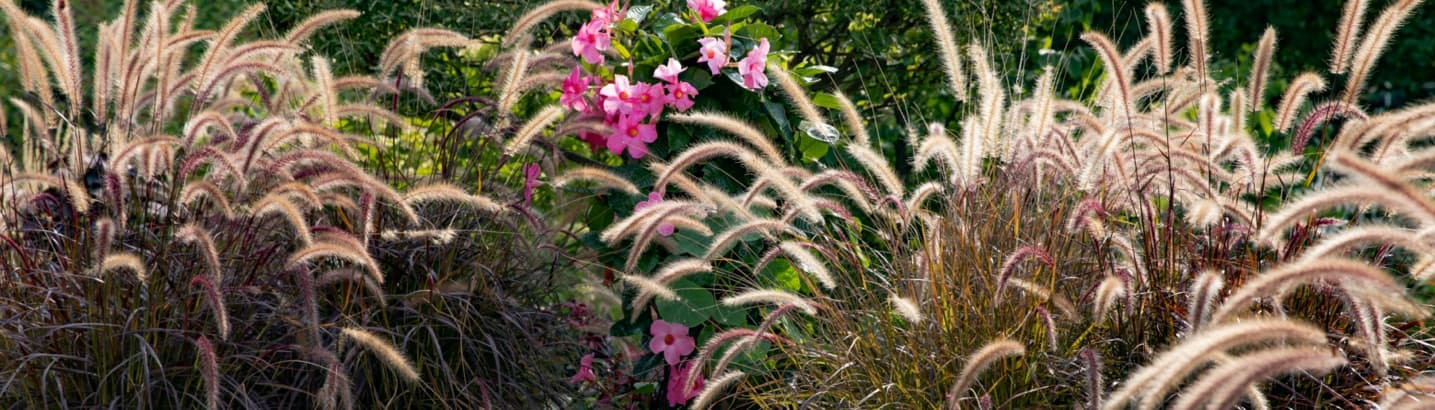 ornamental grasses swaying in the wind