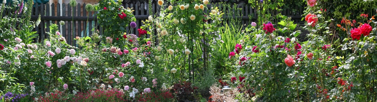 perennial garden filled with roses
