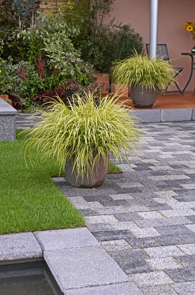 carex sedges in stone containers