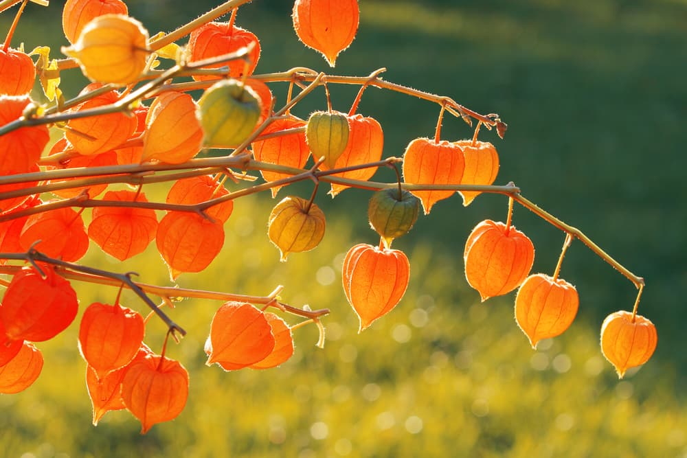 multiple chinese lanterns on branches