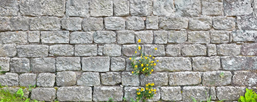 an old stone wall with yellow flowers