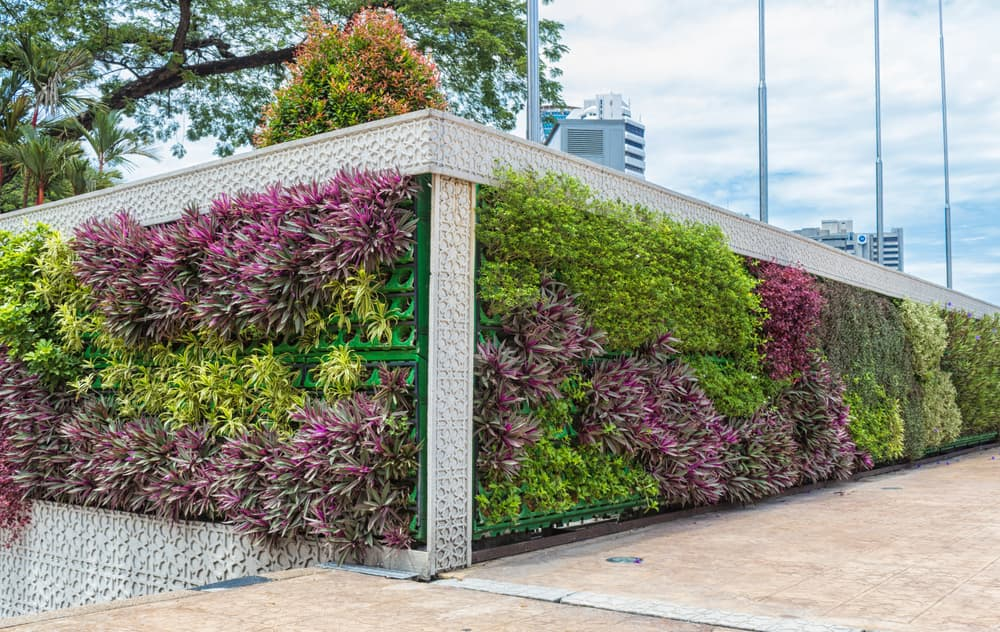 a wall covered in growing plants