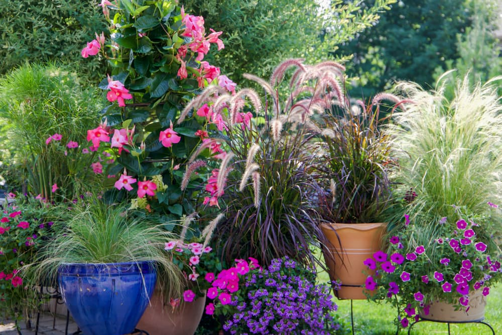 Container garden with Mexican feather grass and ornamental fountain grass