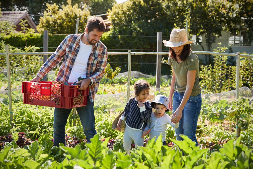 a family in a vegetable plot