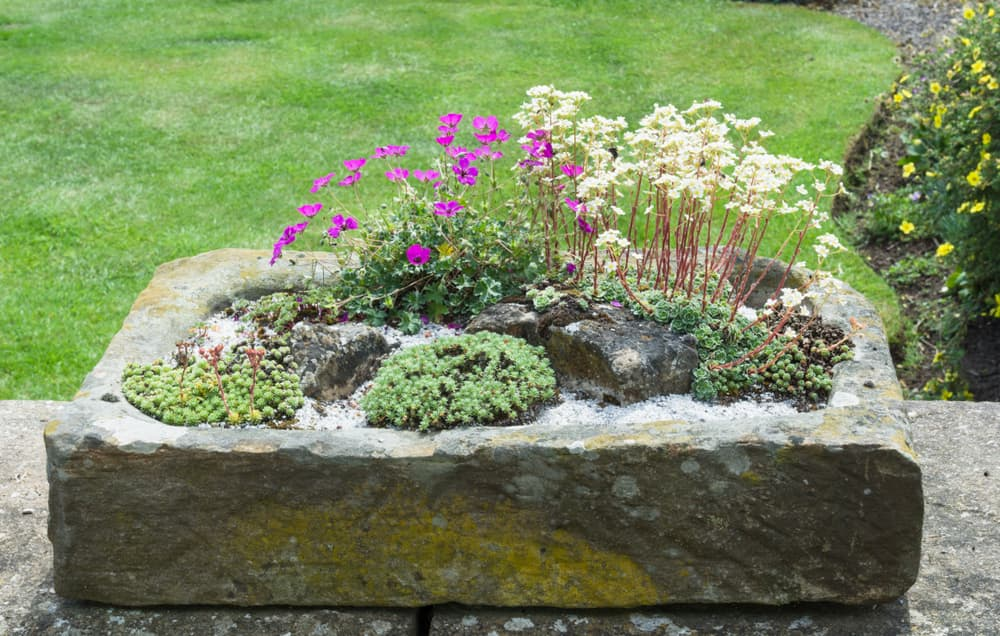 stone planter with alpine plants
