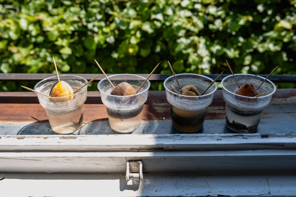 avocado stones germinating in 4 plastic pots