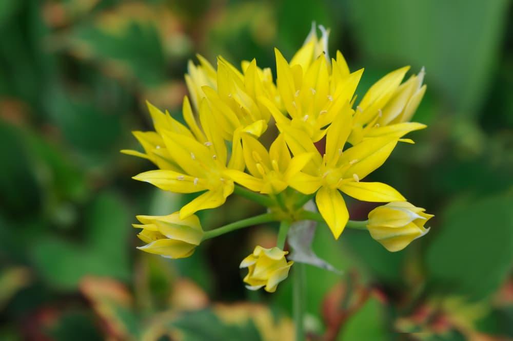 jeannine flowers