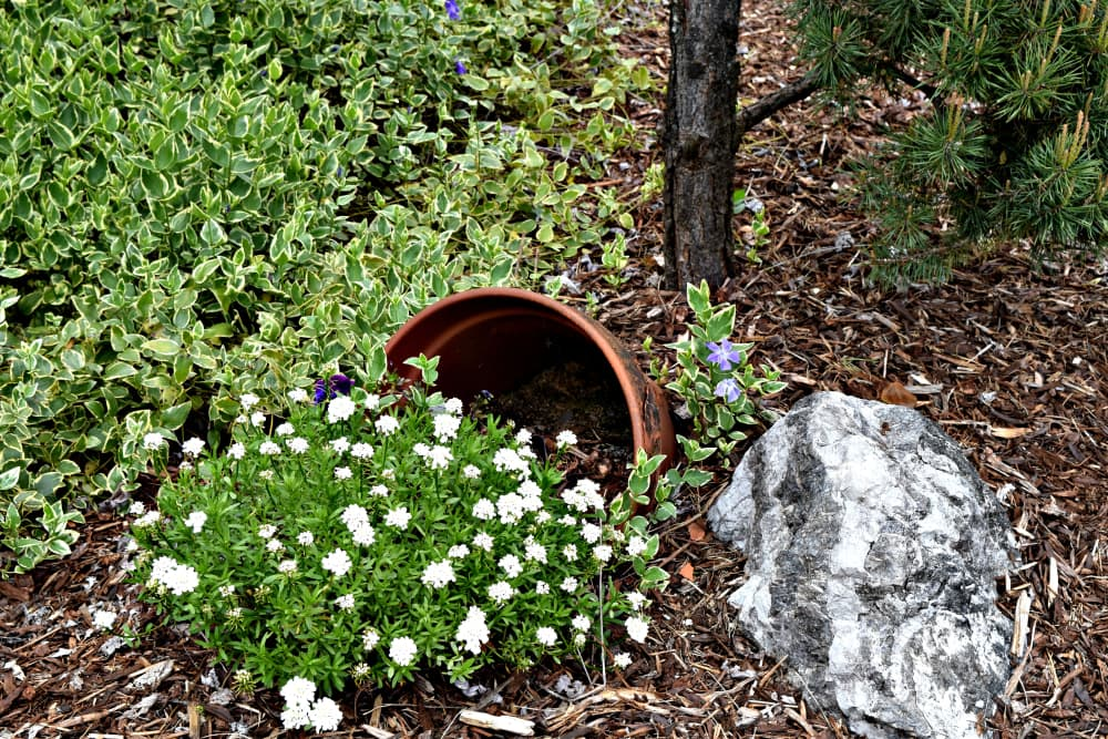 a spilled flowerpot with flowers