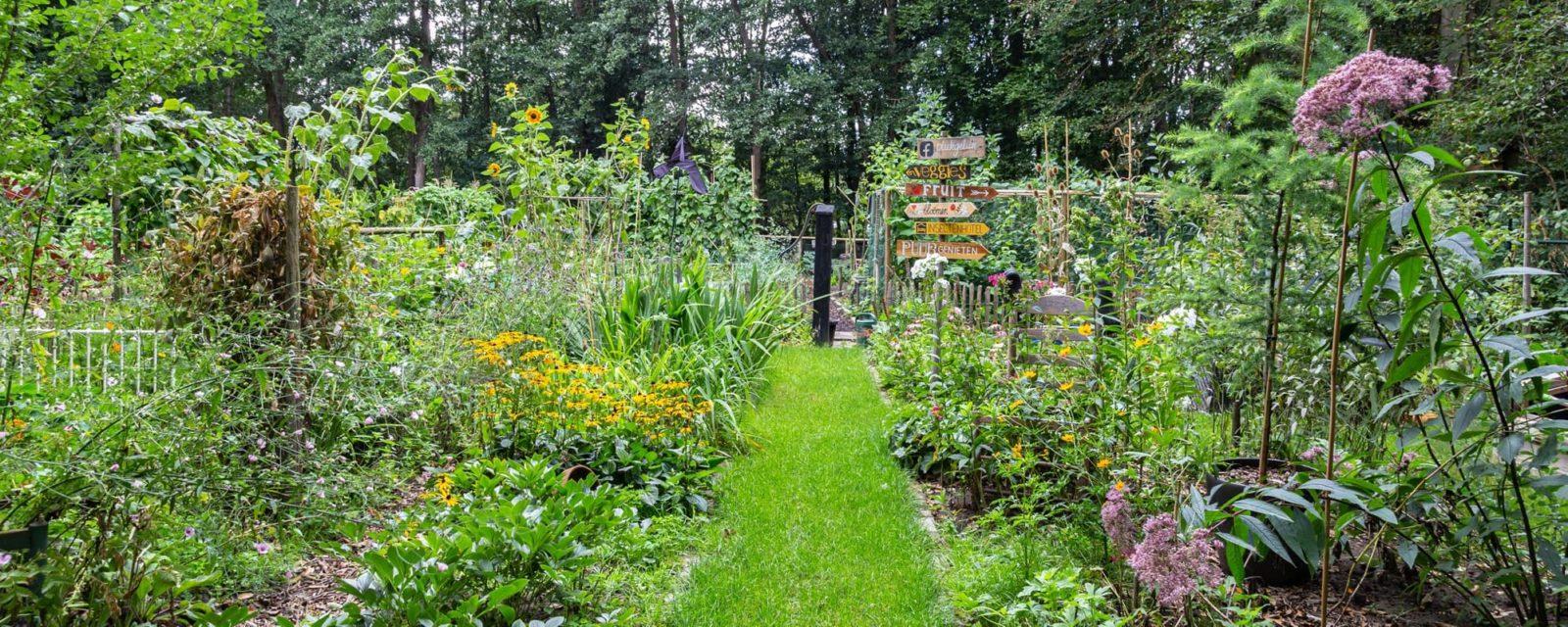 a vegetable garden in the august summer sun