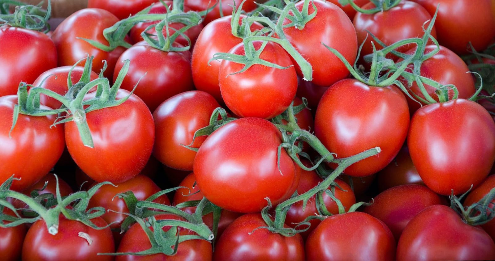 bunches of gardeners delight tomatoes