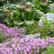 a panoramic rock garden in spring