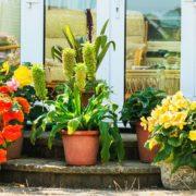 various plants sat in pots on a garden patio