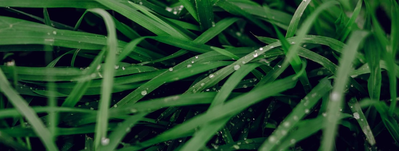 lush green grass with water droplets