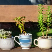 plants in five ceramic cups on a garden bench