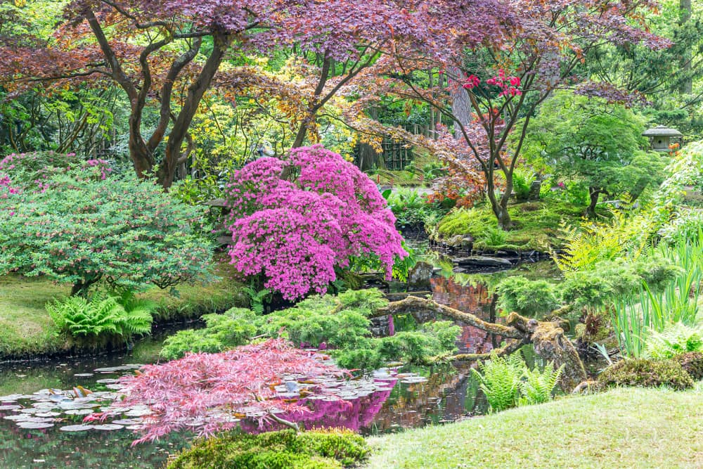 a Japanese garden park