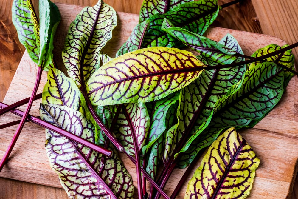 Rumex sanguineus leaves on a wooden table