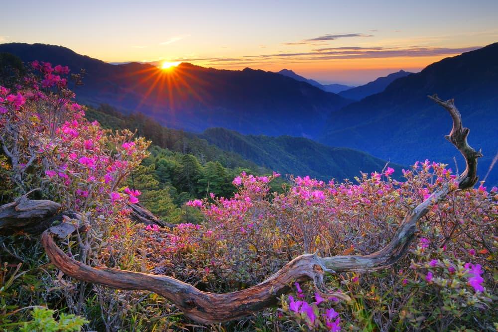 Midsummer scenery of Hehuan Mountain