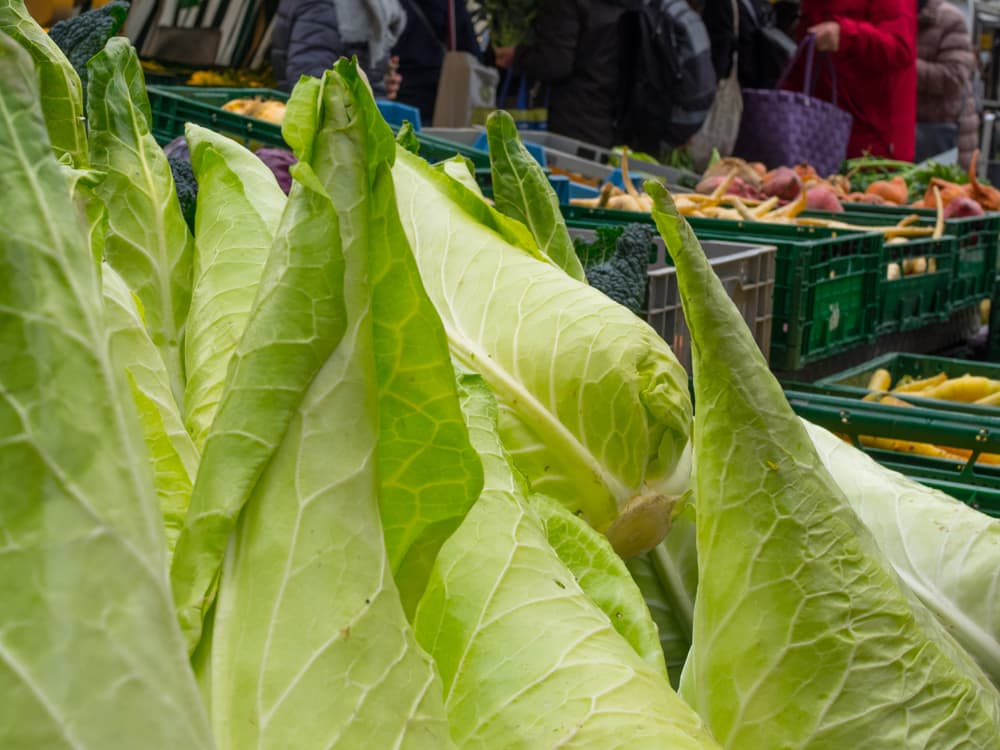 hispi cabbage at a market