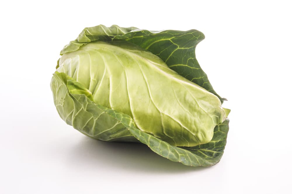 spring cabbage on white background
