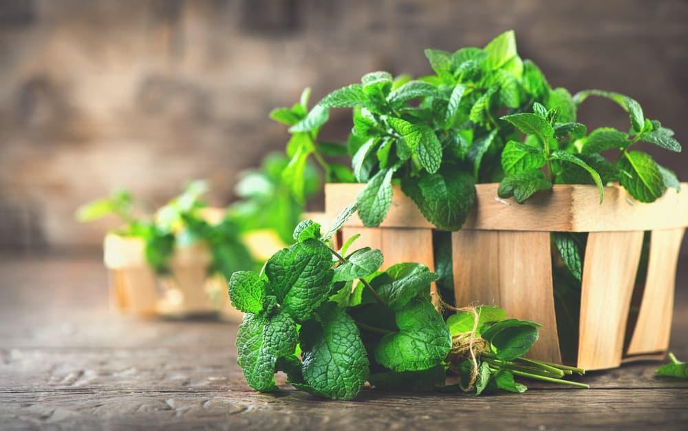 picked mint plants in a basket
