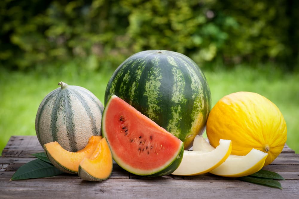 watermelon, cantaloupe and honeydew melons sliced and sat on an outdoor table
