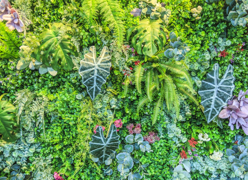 a living plant wall in various shades of green
