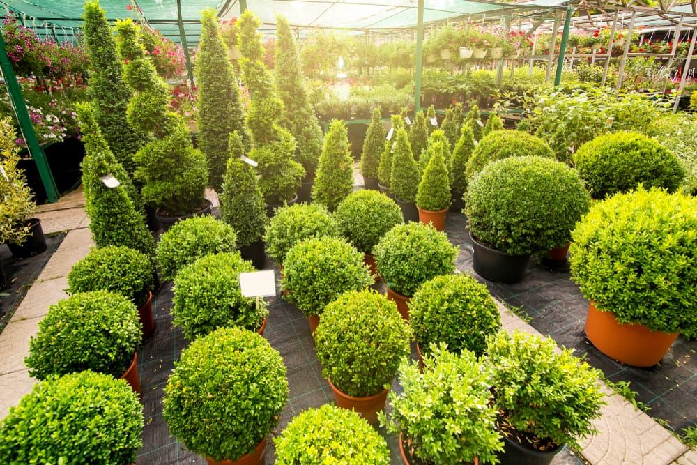 topiary planters in a garden centre