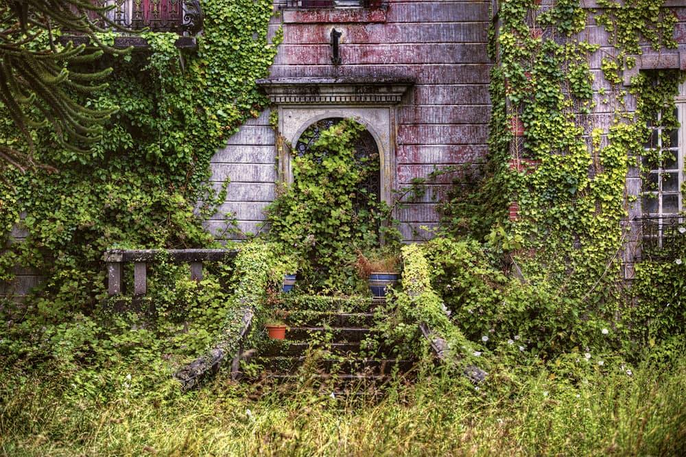 ivy growing on ruins in Langoelan, Brittany