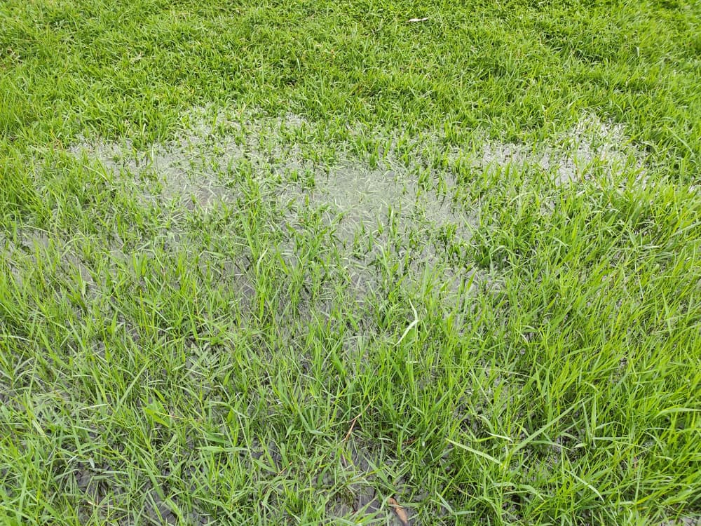 waterlogging on a lawn after heavy rainfall