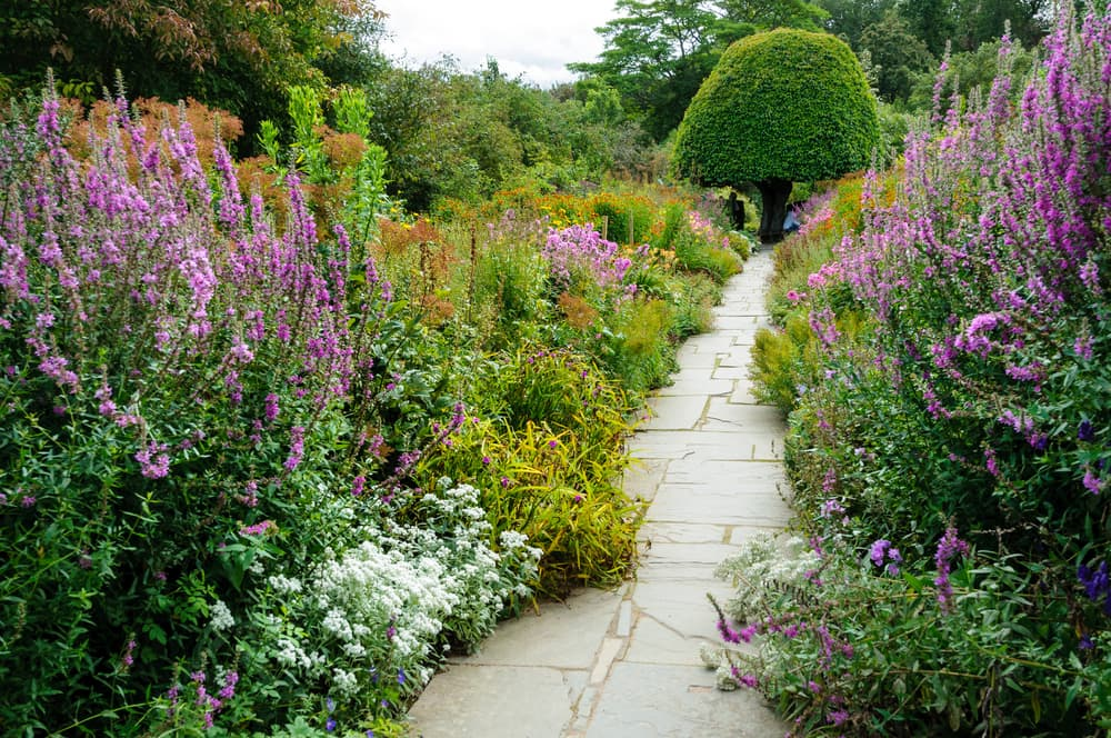 an overgrown herbaceous garden with stone path and tree