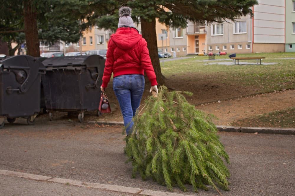 a woman dragging an old christmas tree to some black bins