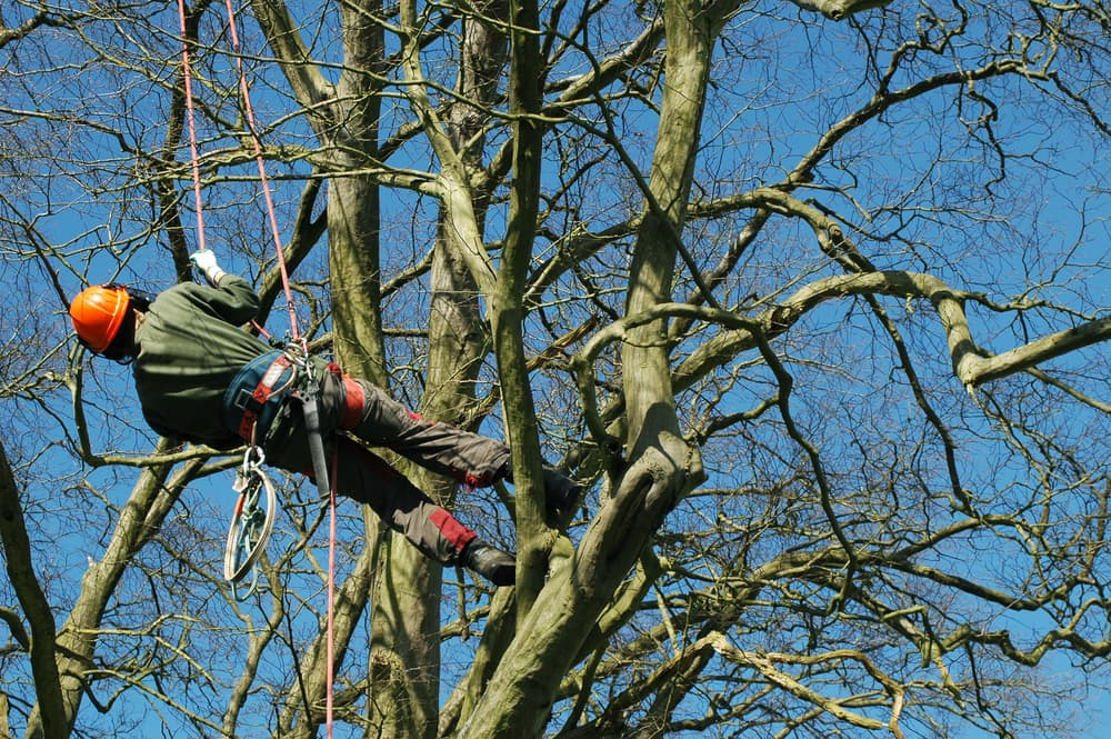 man climbing a tree with ropes