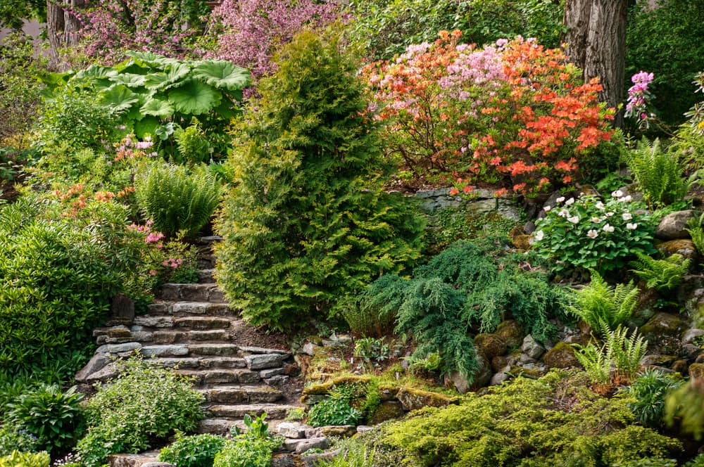 Steep slate steps with some conifers and rhododendron