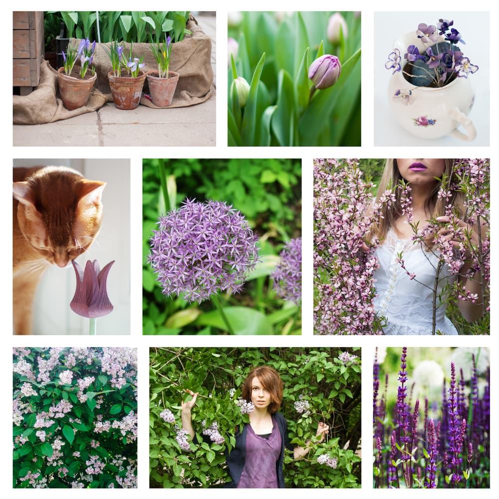 a garden mood board with a lilac theme