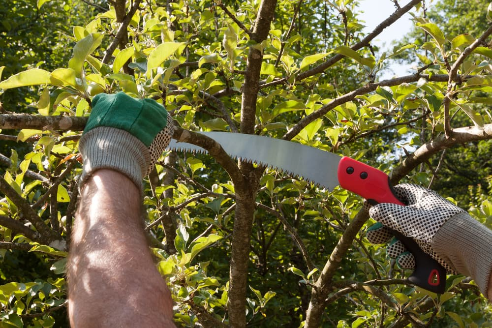 cutting branches with a pruning saw