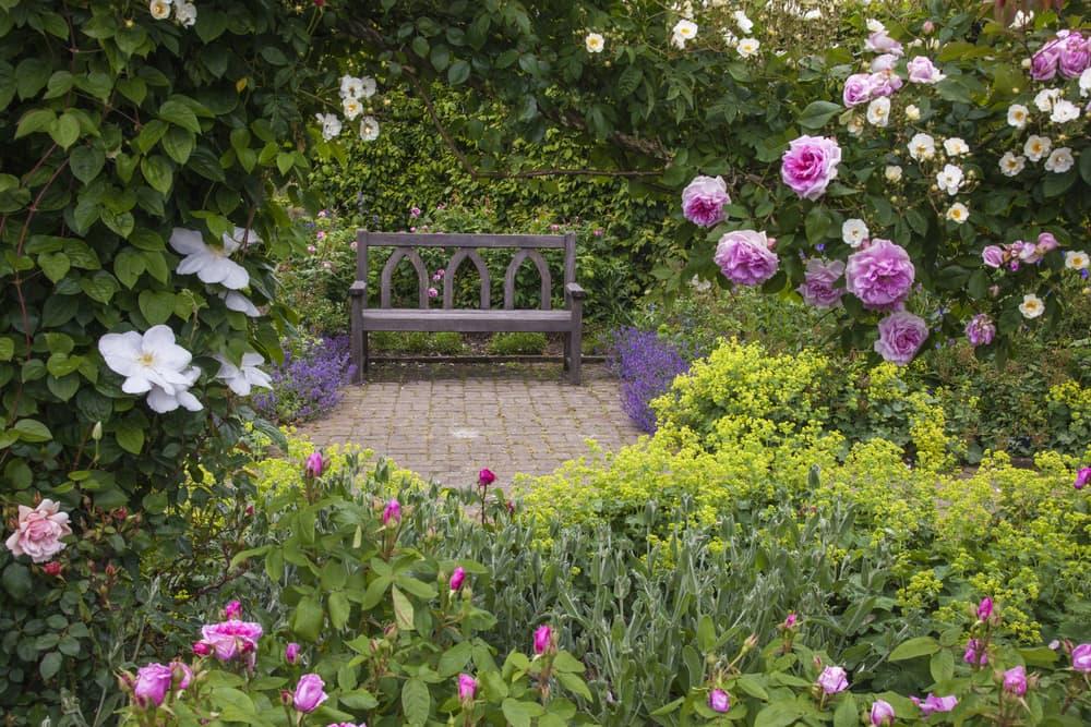 a wooden bench in an overgrown garden