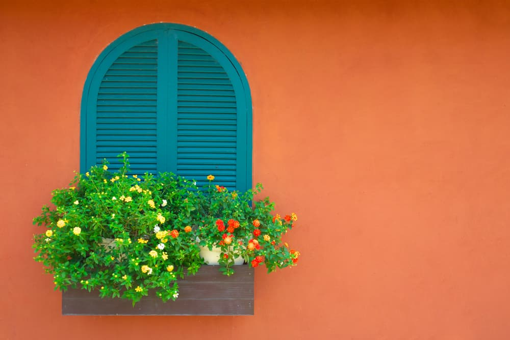 vibrant orange walls with bright flowers growing from a planter