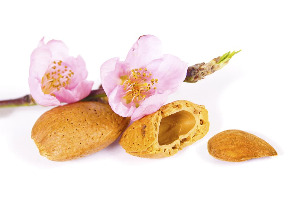 flower, shell and kernel of the almond tree on a white background
