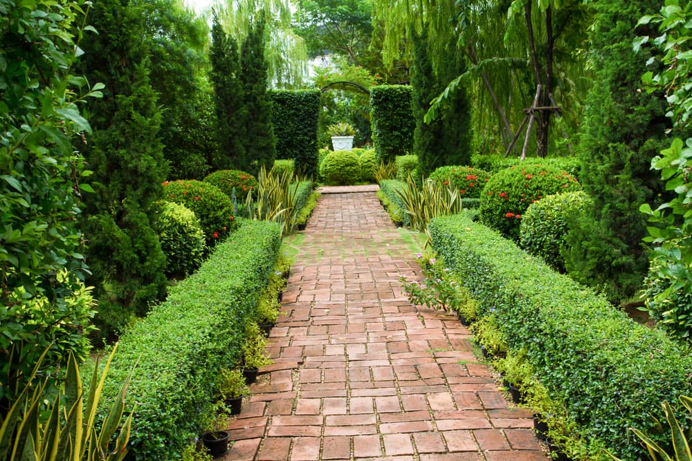 brick walkway surrounded by hedging and conifers