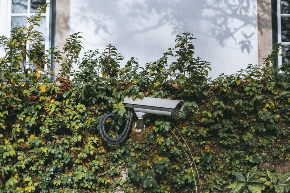 a video surveillance camera on a privacy hedge
