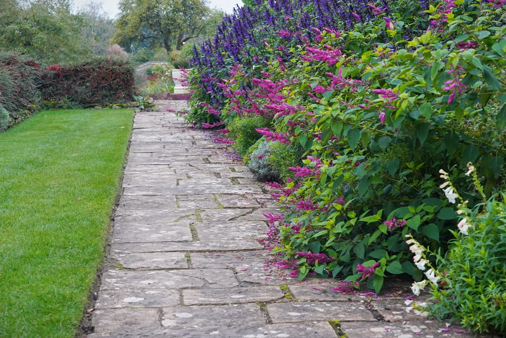 scenic view of a British garden with overgrown buddleja