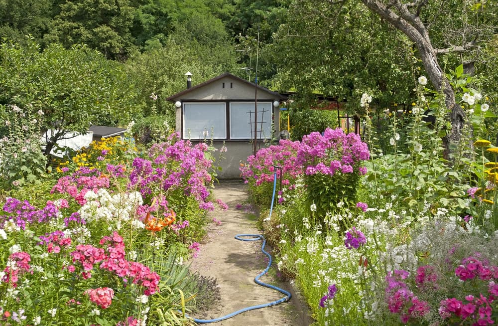 a beautiful cottage garden with overgrown flowers next to a garden path and small house