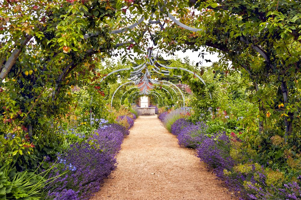 a grotto walkway with lavender border and climbing plants