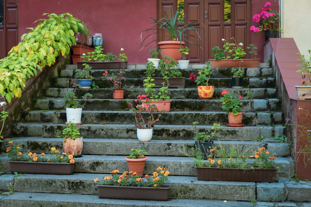 plants in pots on a stairway