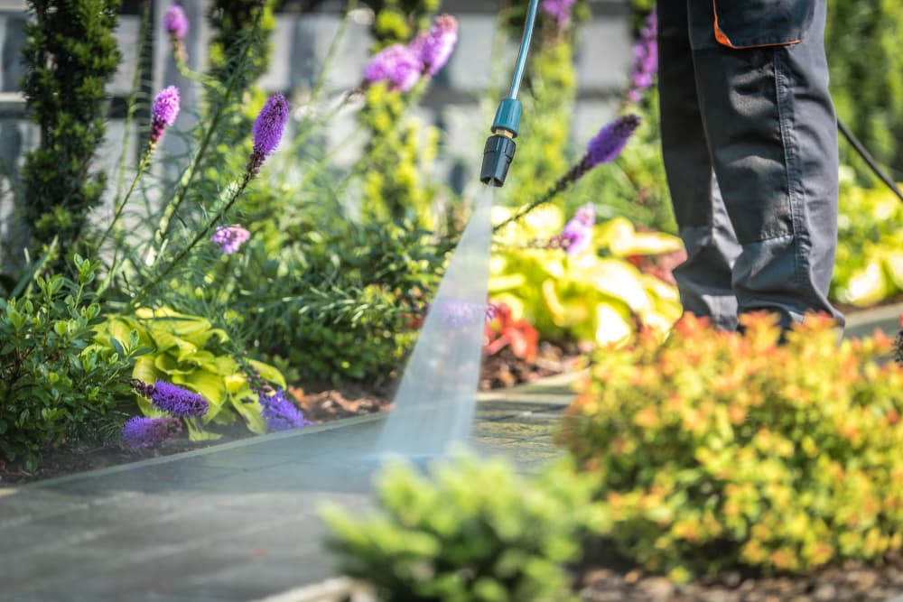 man pressure washing a path with flowers in border background