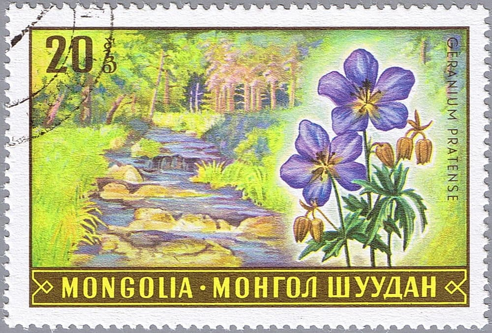 mongolia postage stamp featuring geraniums