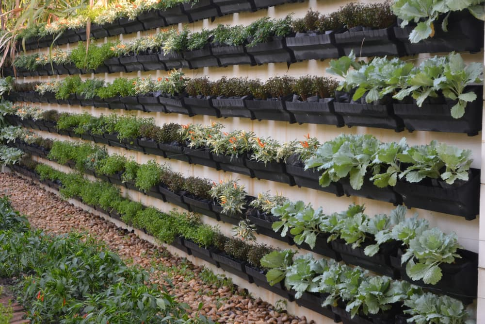 herb planters in rows hung on a wall